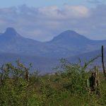 Mais de 11 mil hectares de caatinga preservada no interior da Bahia