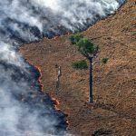Verdades e mentiras sobre as queimadas na Amazônia