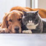 Pesquisa aponta que cães e gatos não transmitem a covid-19