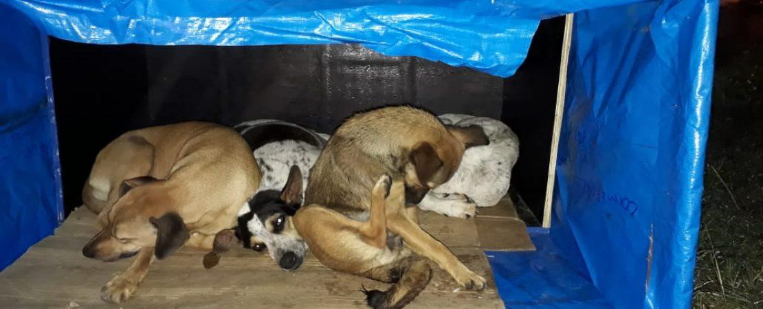 Cães abandonados em Vitória da Conquista