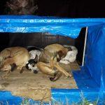 Grupos de proteção, Uesb e adotantes lutam pela dignidade dos animais abandonados