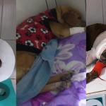 Animais atropelados e abandonados em Conquista contam apenas com a ajuda de ONG's