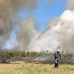 Incêndio destrói vegetação da Lagoa das Bateias
